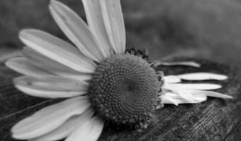 Siyah-beyaz-ask-resimleri-153